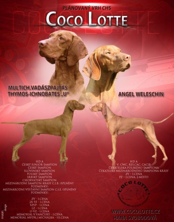 štěně maďarského ohaře na prodej