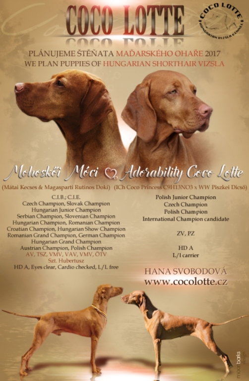 Hungarian vizsla for sale